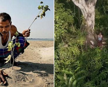 This Man Turned A Desert Into A Forest By Planting A Tree Everyday For 40 Years 3