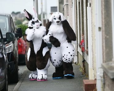 Guy With Rabbit Obsession Dresses Up As Giant Bunny 8