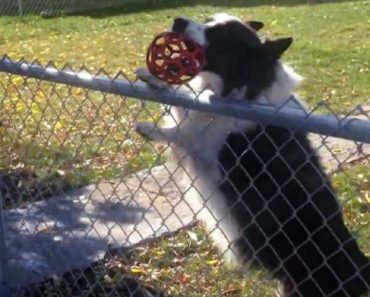 A Clever Dog Tricks a Passer-By Into Playing a Game Of Fetch 8