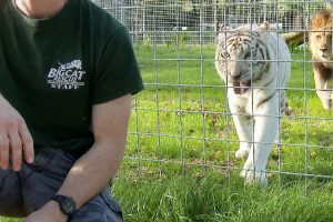 Big Cat Rescue Video Shows Why You Should Never Turn Your Back On BIG CATS 11