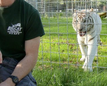 Big Cat Rescue Video Shows Why You Should Never Turn Your Back On BIG CATS 10