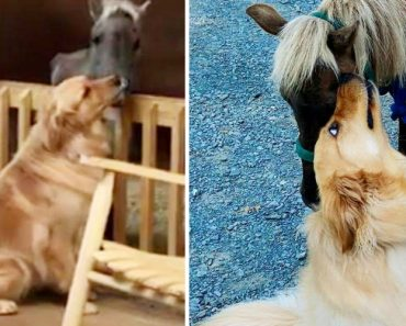 Dog Comforts Rescued Pony That Was Starved of Food and Affection 7