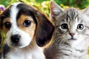 Revisiting The Scientific Proof That Dogs And Cats Are Capable Of Love 10