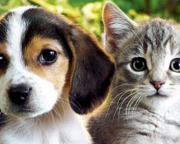 Revisiting The Scientific Proof That Dogs And Cats Are Capable Of Love 1