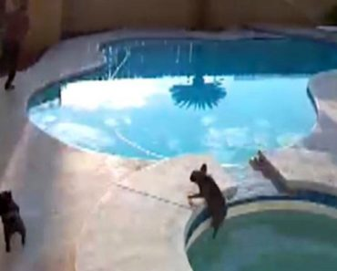 Heart Stopping Moment Dog Owner Realises His Pet Has Fallen Into Pool Before Jumping In To Save Her 4