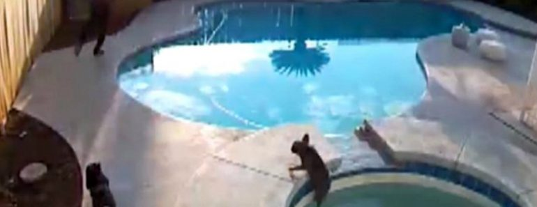 Heart Stopping Moment Dog Owner Realises His Pet Has Fallen Into Pool Before Jumping In To Save Her 1